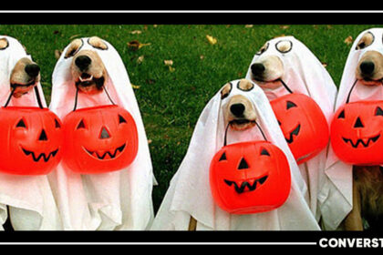 20+ Amazing Halloween Costume Ideas For Your Pets To Rock